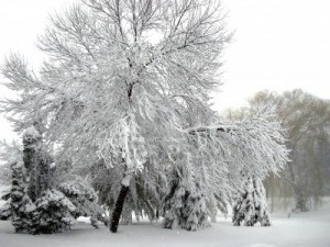 3816380-royalty-free-photo-of-winter-storm-trees-loaded-with-snow-winter-wonderland